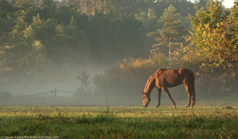 Horse Grazing in Sun