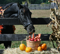 Don't let your horse overindulge on holidays.