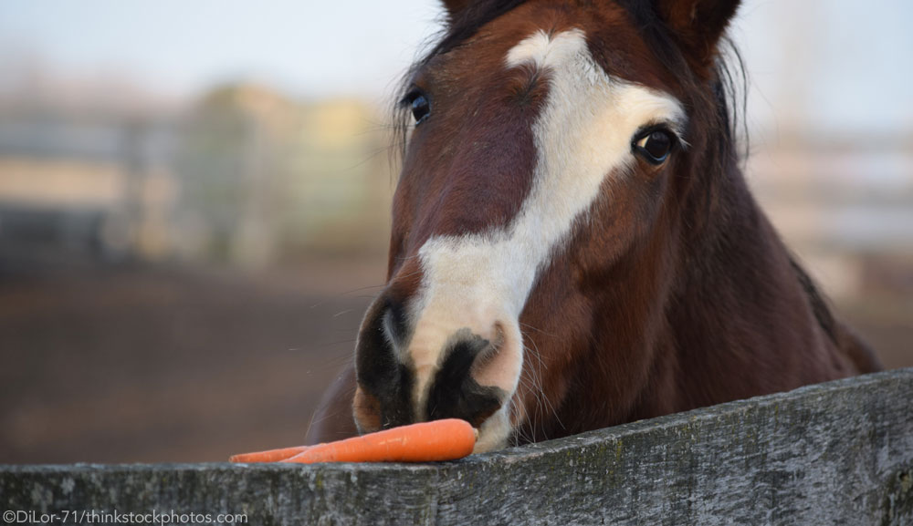 Horse and Carrot