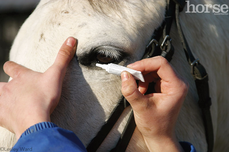 Horse Eye Medication