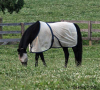 Take measures to protect your horse from the seasonal problems such as insects