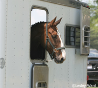 USRider is encouraging equestrians to use a trailering checklist