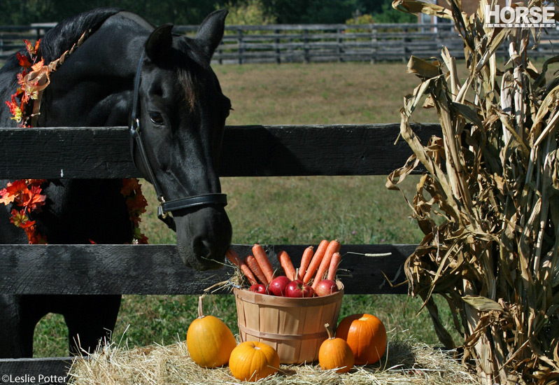Horse with Pumpkin