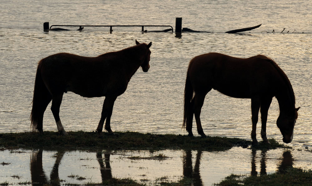 Horses in Flood
