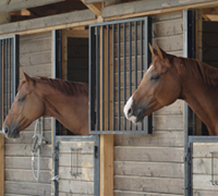 The AAEP is aiding horses in Louisiana and Texas with its' Equine Disaster Relief Fund