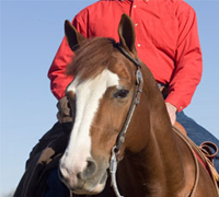 The IPHDA helps horse owners develop well-trained horses