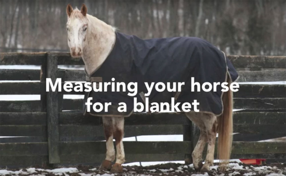 Measure Your Horse for a Blanket