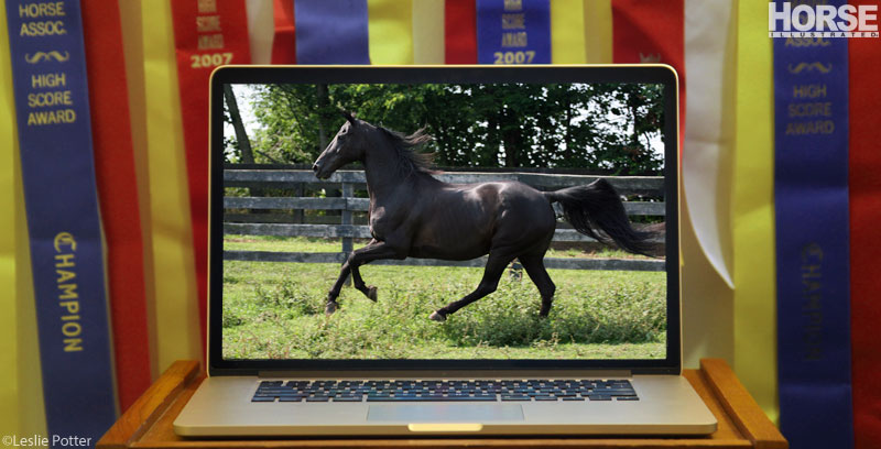 Shopping for Horses Online