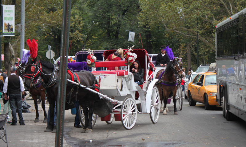 NYC Carriage Horses