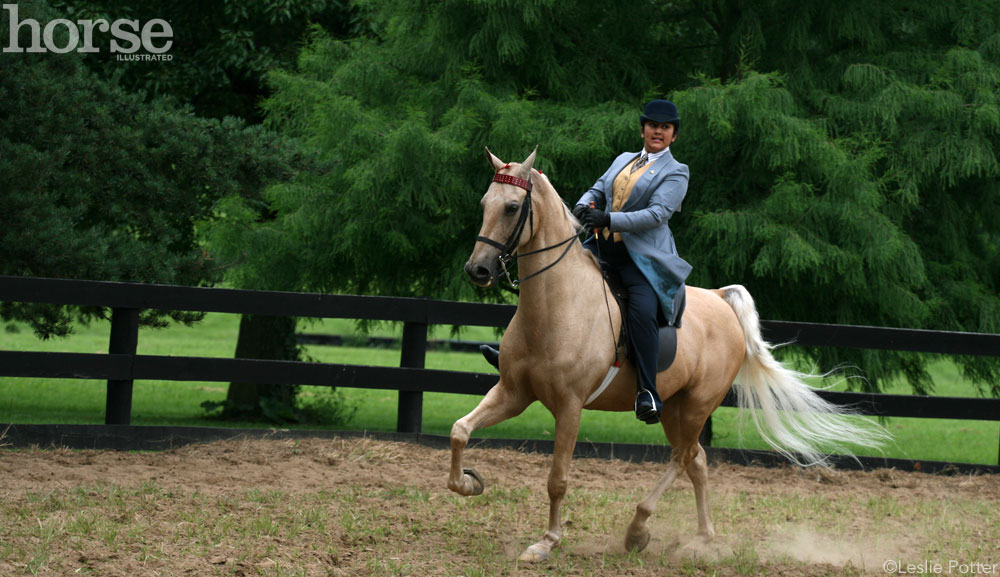 Palomino Saddlebred