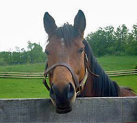 Rescued Thoroughbred Escapefromnewyork