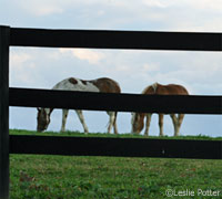 Horses behind secure fencing