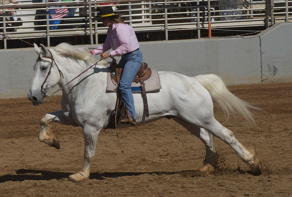 Percheron Barrel Racing
