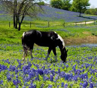 Horse and flowers