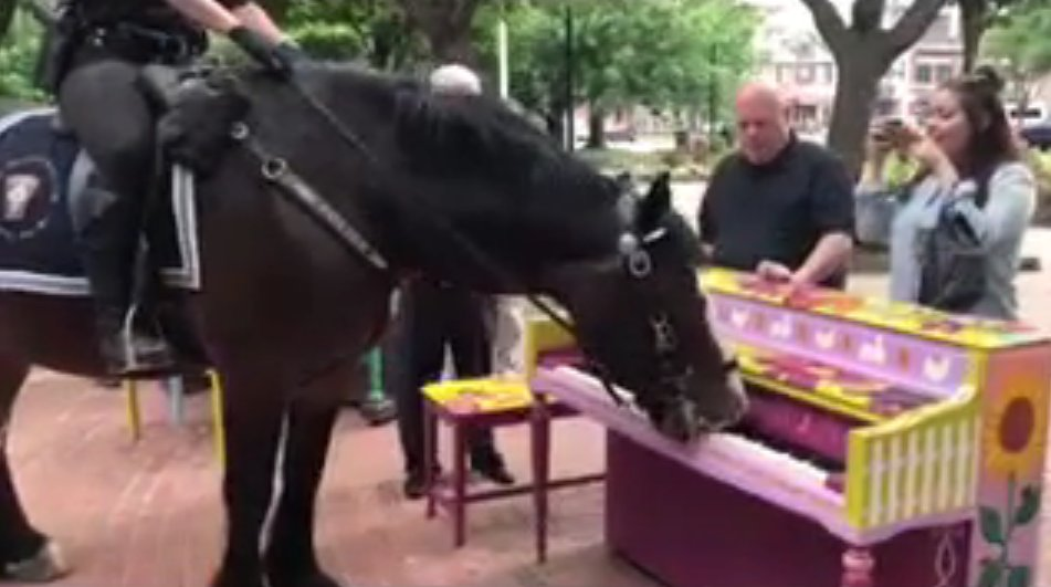 Police Horse Plays Piano
