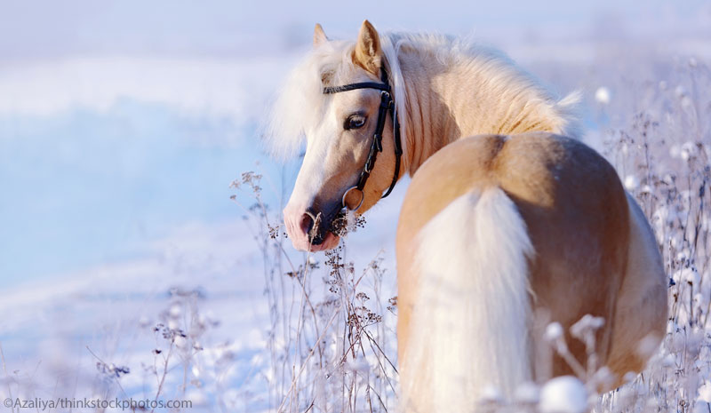 Pony in the Snow