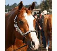The 2009 AQHA World Show featured over 3,400 entries