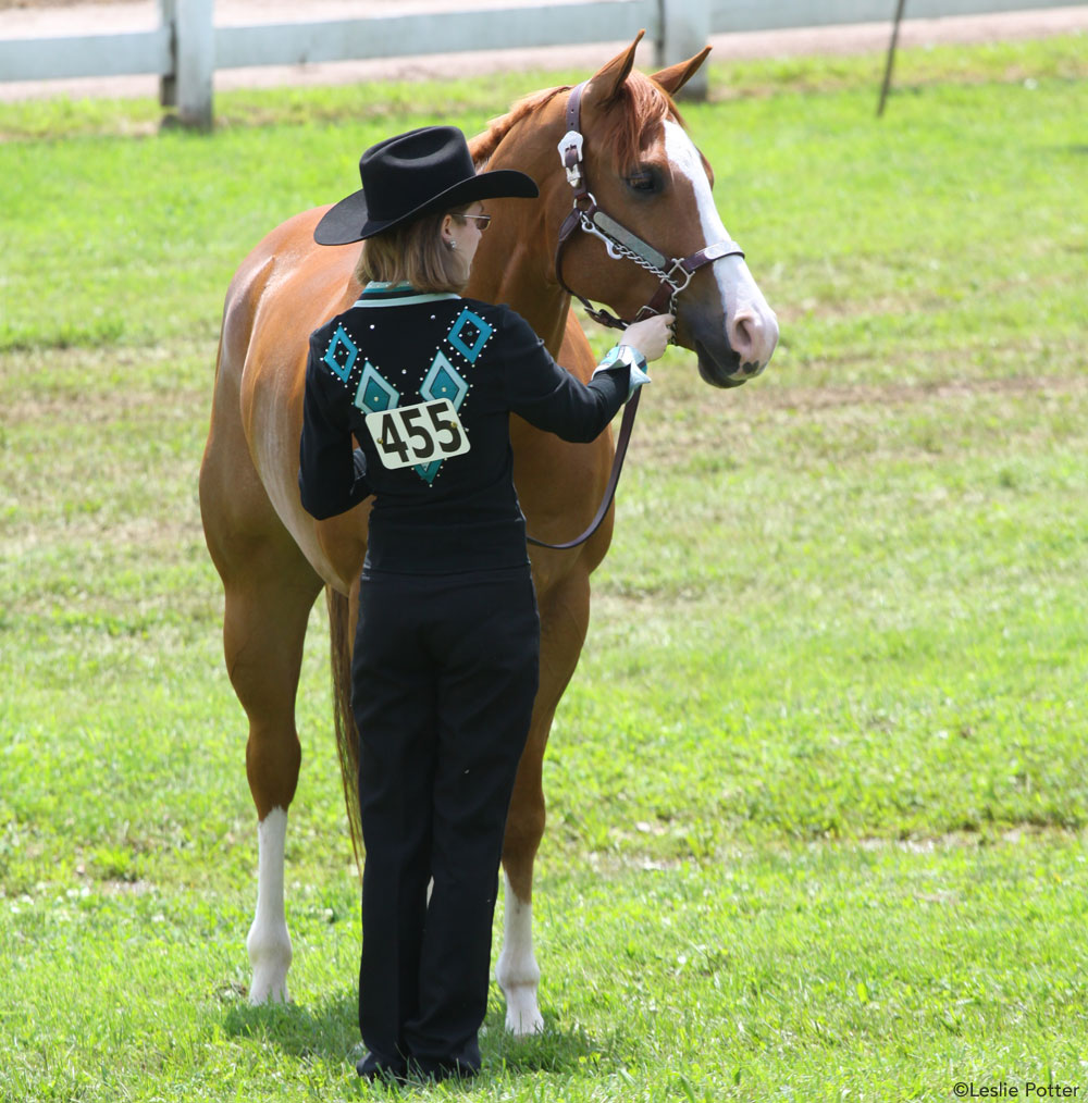 How to Show in Halter Classes