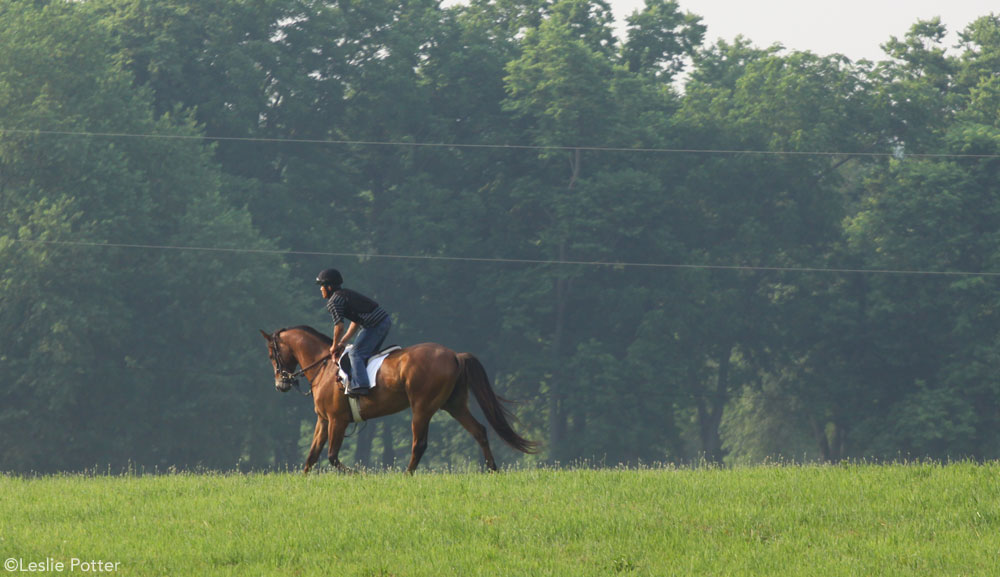 Racehorse Training