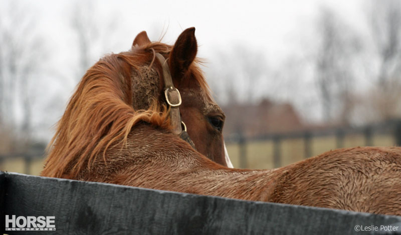 Blaze's Tribute Equine Rescue successfully saved 17 horses