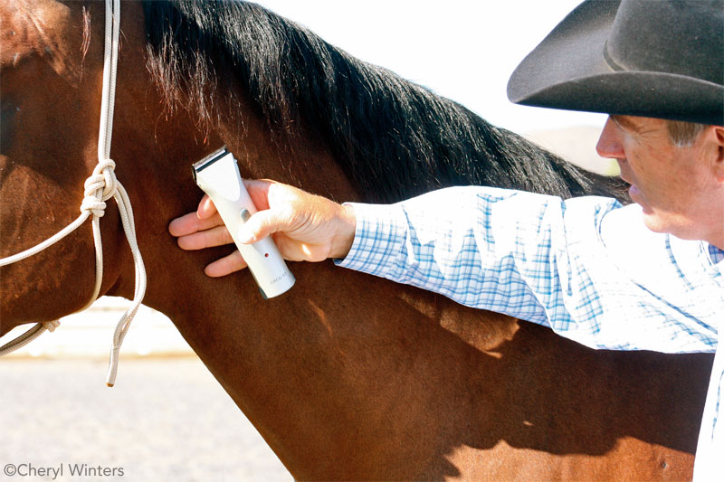 Desensitizing a Horse to Clippers