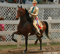 Saddle seat equitation rider