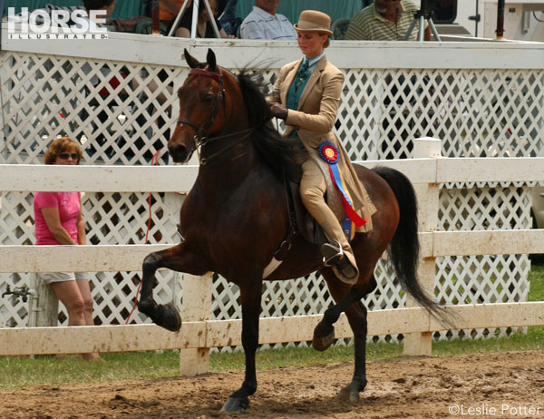 Saddle seat equitation victory pass