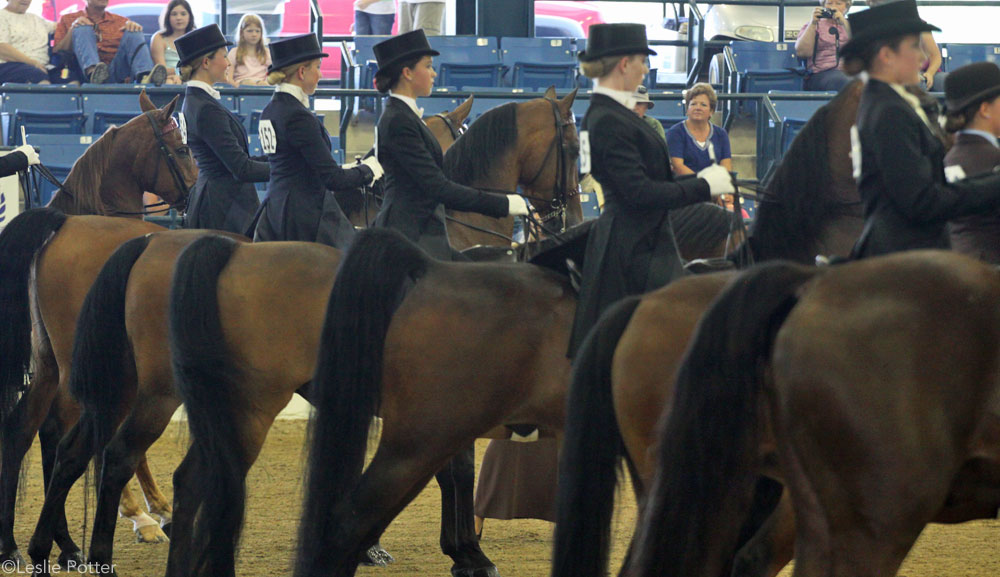 Saddle Seat Line Up