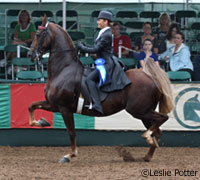 Saddle seat equitation