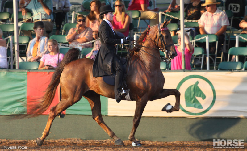 Five-Gaited Saddlebred
