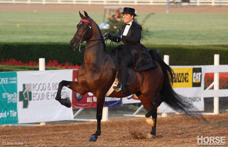 Three-Gaited American Saddlebred