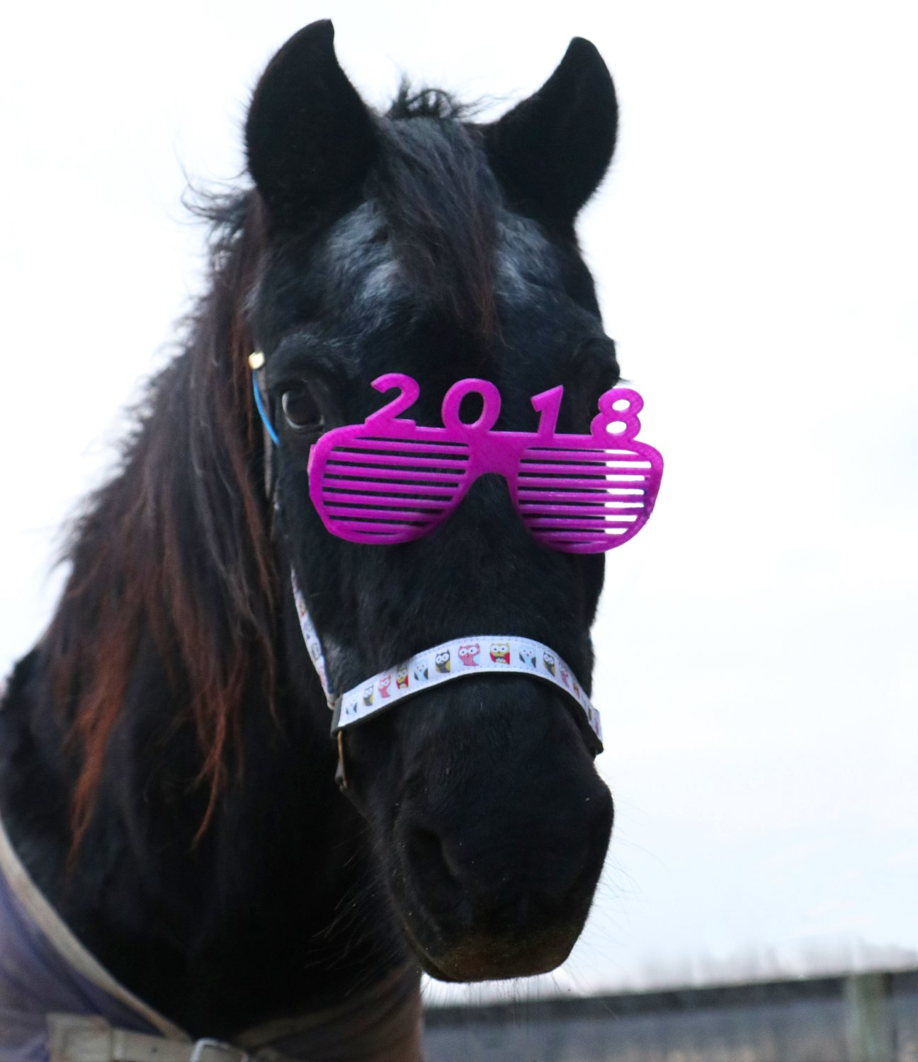 2018 New Year Horse