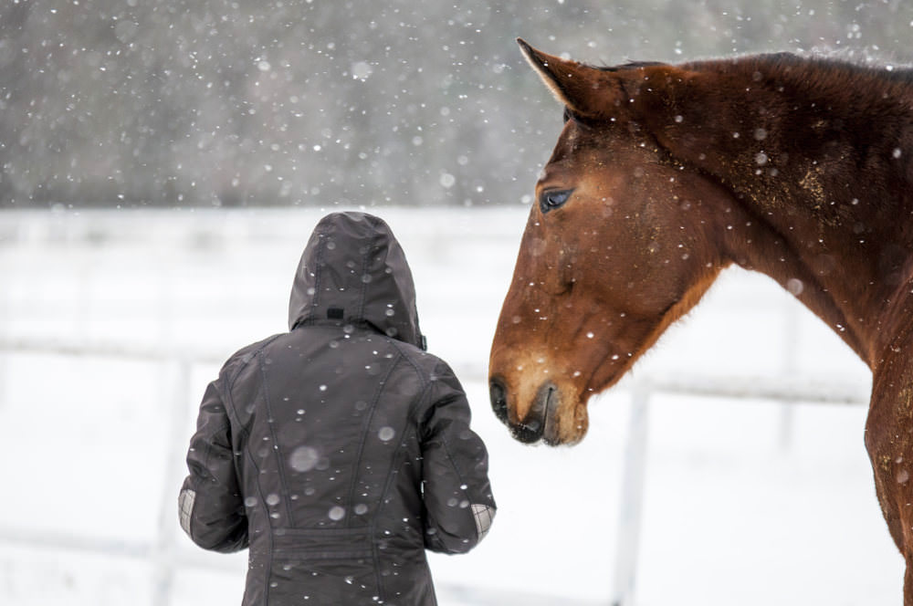 Snowy horse and human