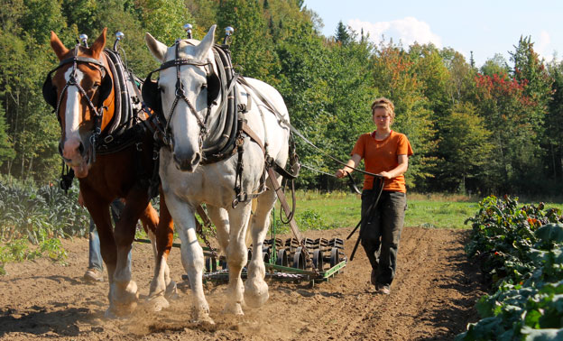 Draft Horse Farming