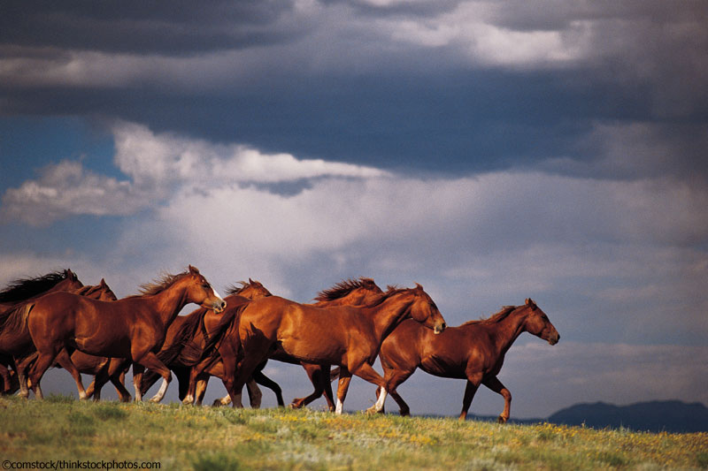 Horses in a Storm