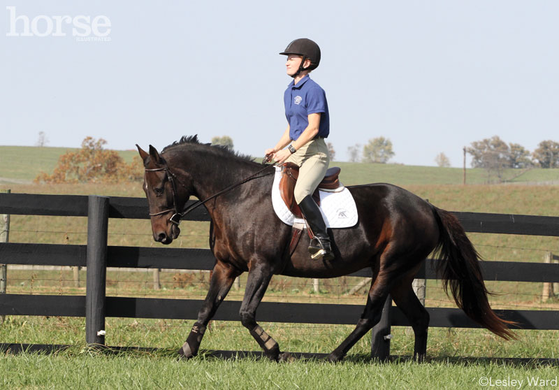 Teach Your Standardbred to Canter