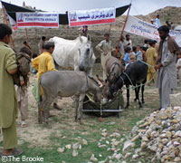 Equines at an emergency station in Pakistan