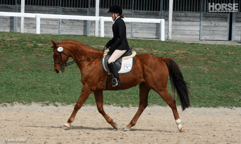 Thoroughbred Dressage