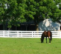Retired Thoroughbred