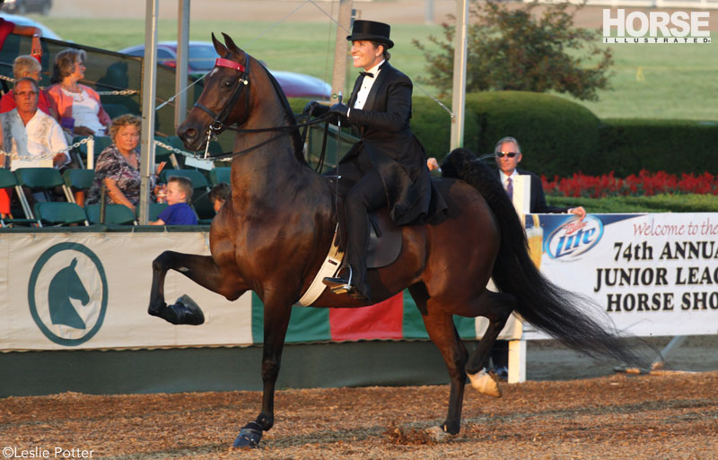 Three-Gaited Saddlebred