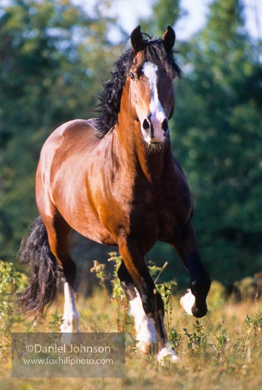 Orion the Welsh Stallion