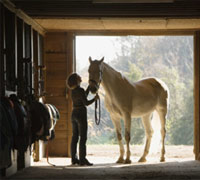 Behavior modification therapy for horses can fix multiple issues