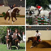 World Equestrian Games Sports