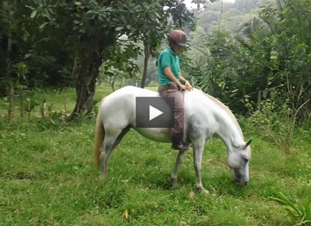 Bridleless Trail Riding in the Rainforest