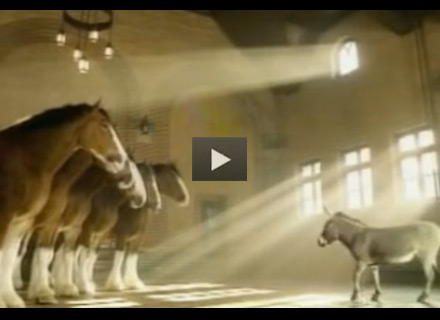 Budweiser Clydesdale Ad: Donkey