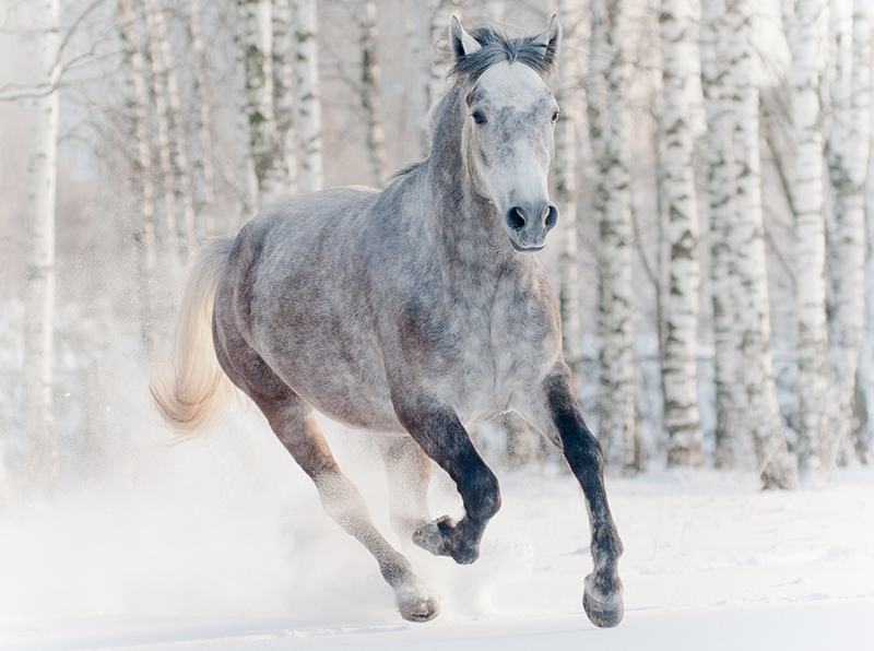 Prep Your Senior Horse For Winter