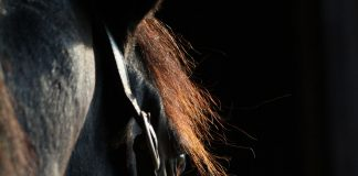 Closeup of a horse's face