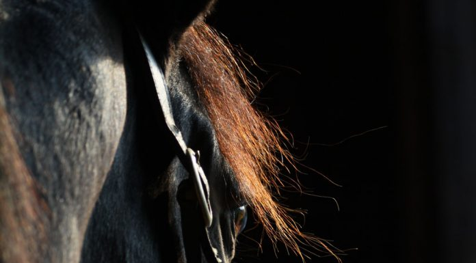 Closeup of a horse's face