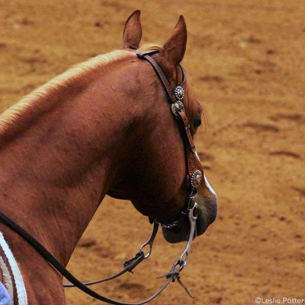 Sorrel western horse in a curb bit