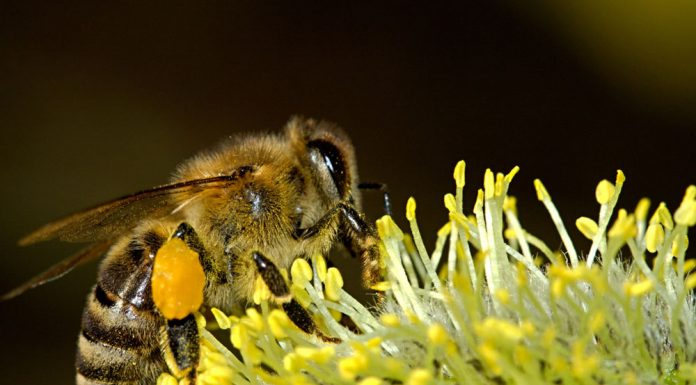 Closeup of a bee